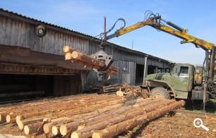 Закупка леса на пилораму